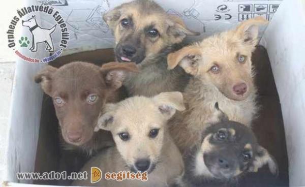 Adó 1% felajánlás állatvédelemre