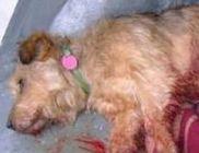 Sintértelepek helyett reform: ebrendészet végzi a kóbor állatok állatbarát begyűjtését