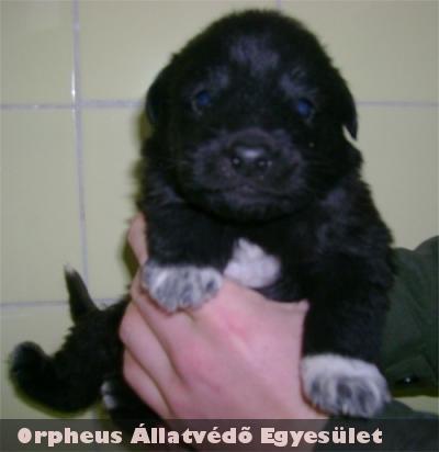 Édi Black 04 is gazdira lelt az Orpheus Telepén