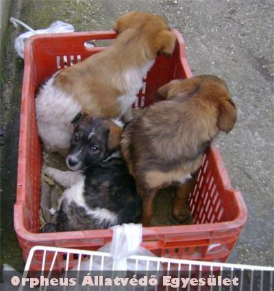 Lada és két testvére is állatbarát családhoz került!