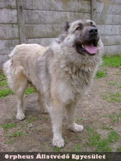 Kauka gazdit talált egy kutyaszeretõ családnál
