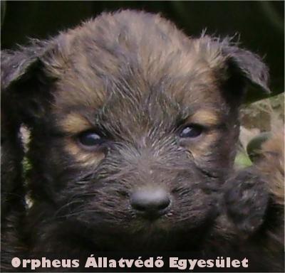 Tudornak is gazdit talált az Orpheus Állatvédõ Egyesület