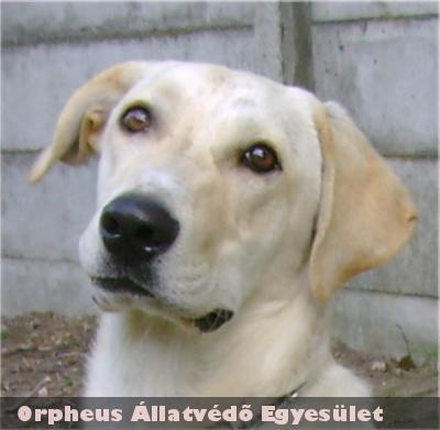 Új kutyabarát családot találtunk Rodosznak