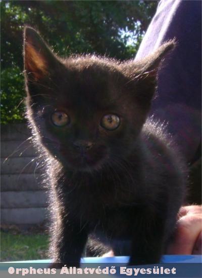 Lomi cicát is örökbe adta az Orpheus Állatvédõ Egyesület