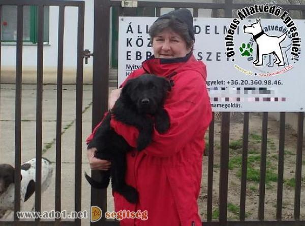 Állatbarátok adó 1% felajánlásának is köszönhetően szerető Gazdihoz került Bob