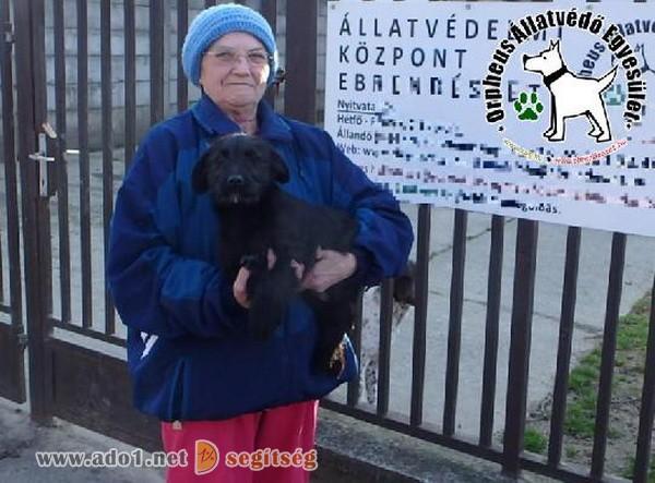 Állatbarátok adó 1% felajánlásának is köszönhetően szerető Gazdihoz került Tib
