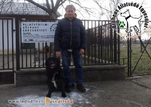 Állatbarátok által felajánlott adóegyszázalékoknak köszönhetően került Kevin szerető Gazdihoz