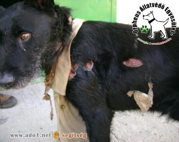 Állatkínzás elleni küzdelem - adó 1% támogatás állatvédelemre