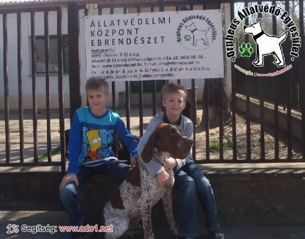 Ácsi az állatbarátok adó 1% felajánlásainak köszönhetően került vissza eredeti Gazdijaihoz