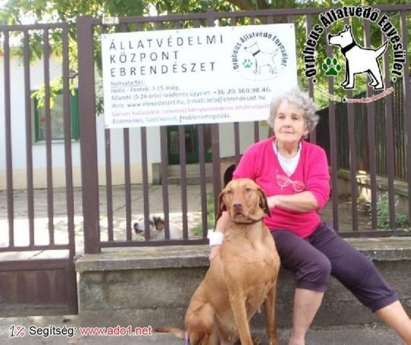 Kutyamentés: Alíz új Gazdira talált!