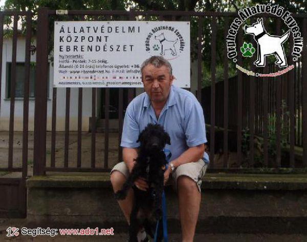Állatbarátok adó 1 százalékának köszönhetően Gazdihoz került Csiki