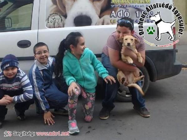 Andy Gazdihoz került - egész évben kutyákat mentünk