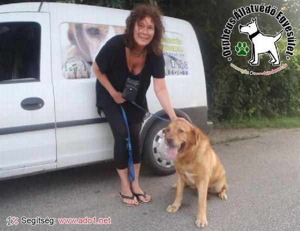 Az állatbarátok által felajánlott adóegyszázalékoknak köszönhetően Kokó szerető Gazdihoz került