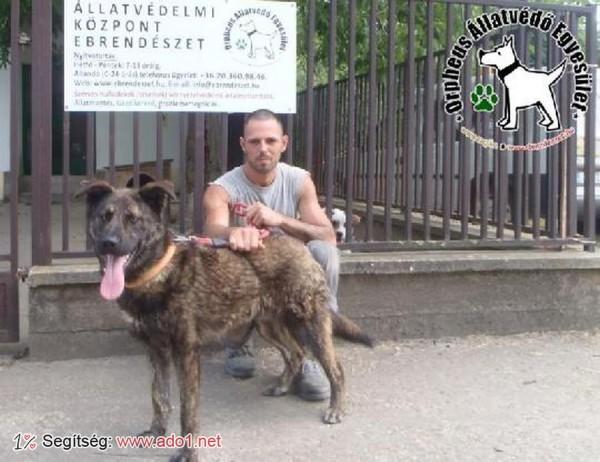 Kutyamentés: Backi Gazdihoz került!