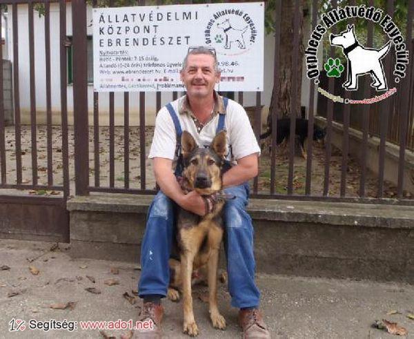 Bendegúz állatbarátok adóegyszázalékának köszönhetően menekült meg és került haza eredeti Gazdijához