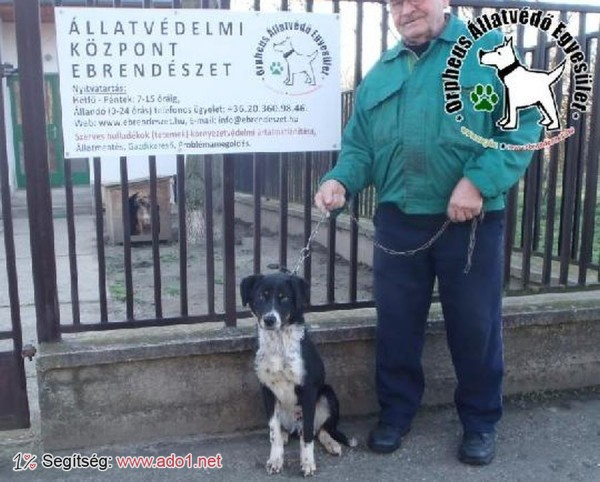 Kutyamentés: Csodát megmentettük!