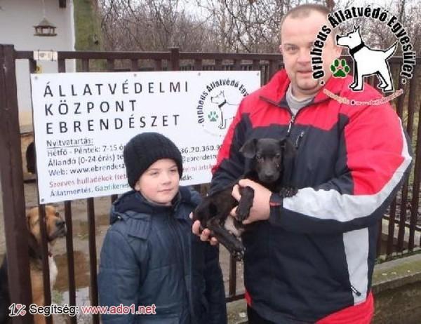 Kutyamentés: Labi Gazdihoz került!