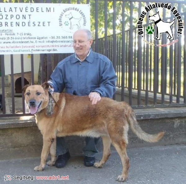 Állatmentés: Megmentettük Bronz (Johny) kutyust!
