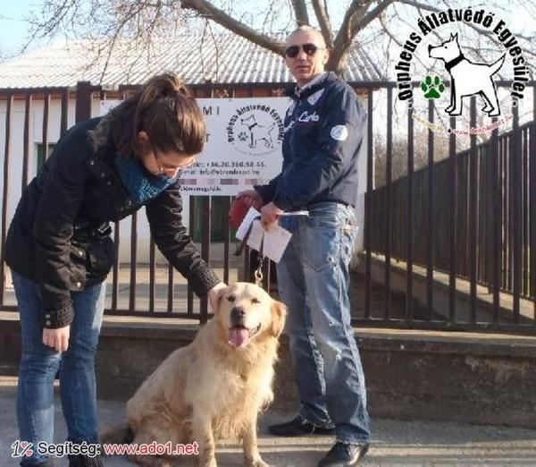 Megmentettük Dobó kutyát!