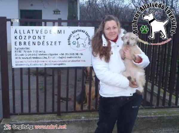 Megmentettük Dorka kutyust!