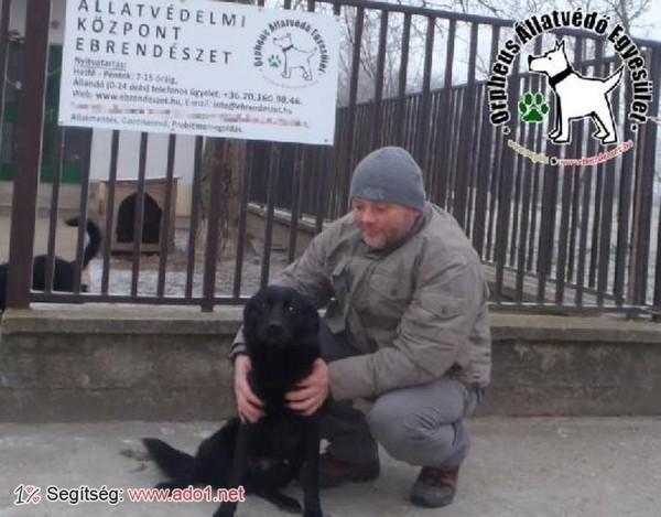 Megmentettük Karcsika kutyust!
