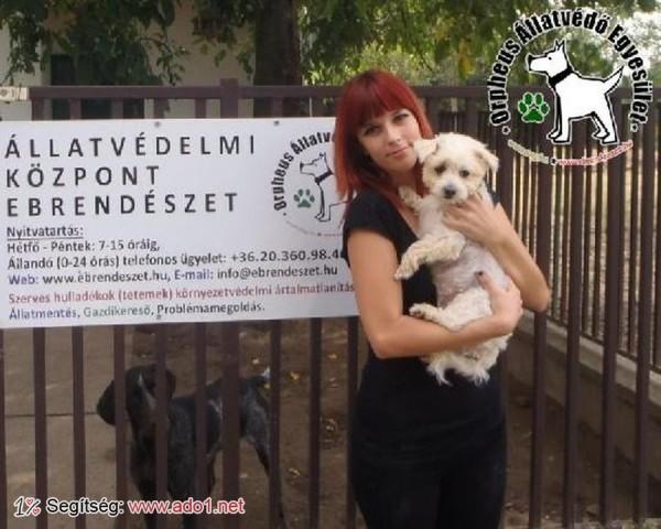 Kutyamentés: Megmentettük Micu kutyust!