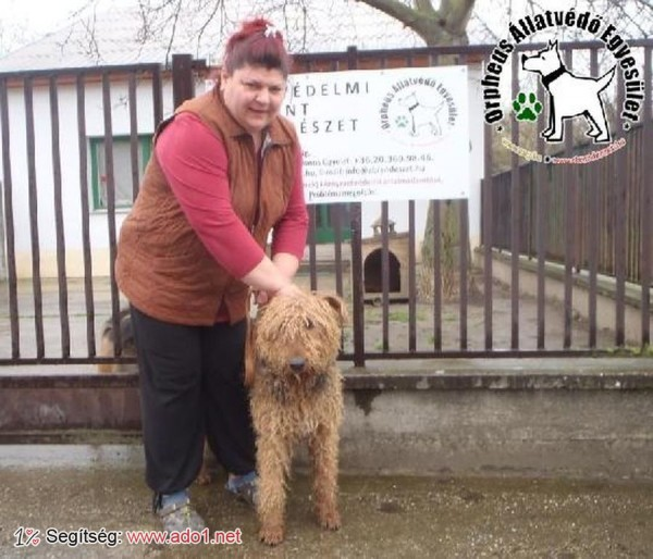 Megmentettük Molli kutyát!