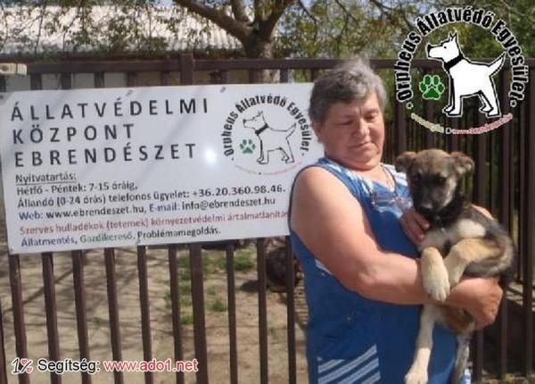 Megmentettük Titi kutyust!