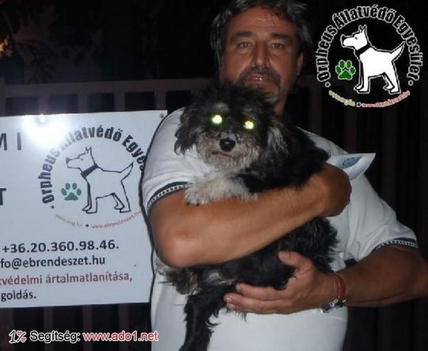 Állatmentés: Megmentettük Zara kutyust!