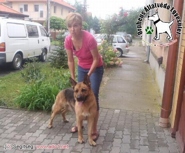 Sára állatbarátok adóegyszázalékának köszönhetően menekült meg