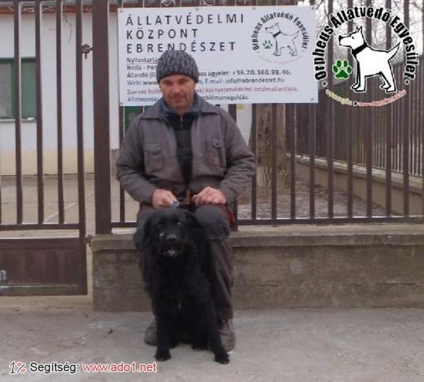 Kutyamentés: szerető Gazdihoz került Balma!