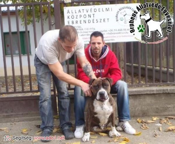 Kutyamentés: szerető Gazdinál Farek!