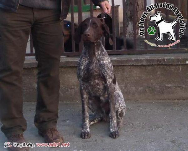 Trombi az állatbarátok Szja 1% felajánlásának köszönhetően jutott Gazdihoz