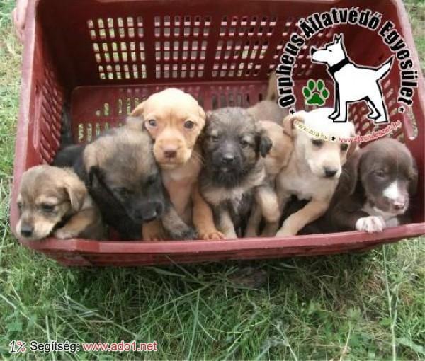Utcáról mentett kutyusok - évente 800 állat mentésében veszünk részt
