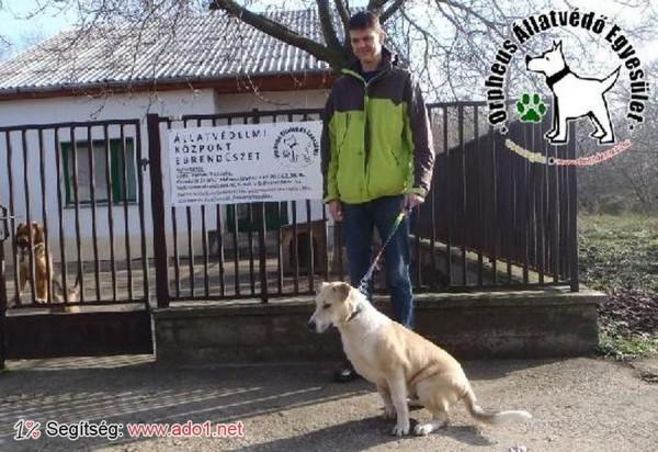 Állatmentés: Zebrát megmentettük!