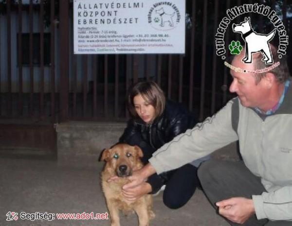 Kutyamentés: Zsömi Gazdihoz került!