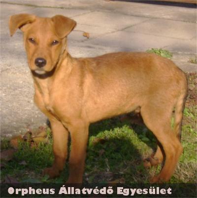 Az Orpheus Állatvédõ Egyesület munkatársai gazdit találtak Pannak is