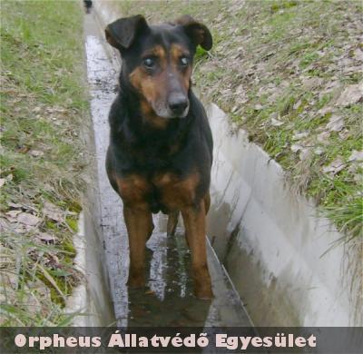 Az idõs kutyus gazdáját felkutattuk, és visszaadtuk neki