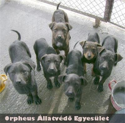 Mind a 6 kiskutyának gazdát talált az Orpheus Állatvédõ Egyesület