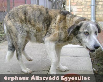 Az Orpheus munkatársai az utcán kóborló kutyát befogták, gazdáját felkutatták, és visszaadták neki