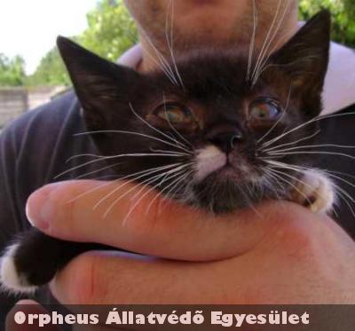 Egy idõs bácsitól (aki nem tudta ellátni rendesen az állatokat) hoztuk el a 4-5 hetes Cilikét. Szeretõ gazdihoz került.