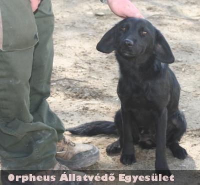 Rékára egy ipartelepen talált az Orpheus Állatvédõ Egyesület, majd új gazdit talált neki!
