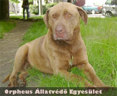 Vezér hamar új gazdára lelt az Orpheus Állatvédõ Egyesület ebrendészeti telepén