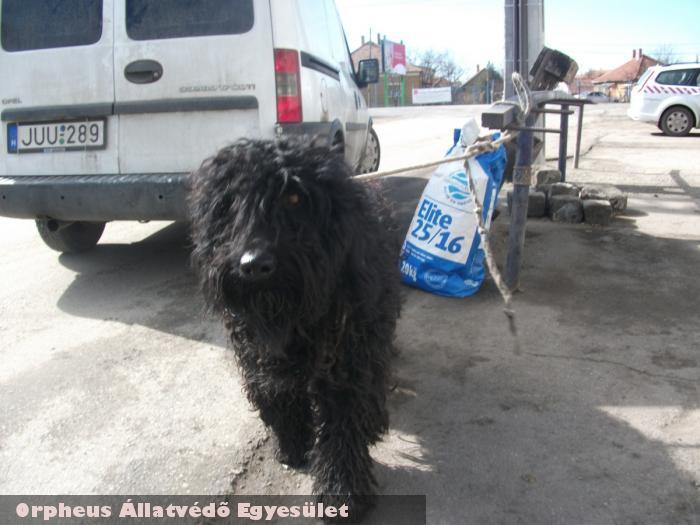 Megunták, kikötve a bolt elõtt hagyták - támogassa az állatok megmentését adó egy százalékával!
