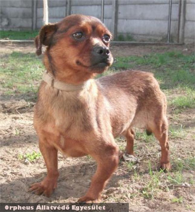 Mogyi az apró kutyus az Orpheus állatmentõ munkája révén lelt új lehetõségre. Adó 1%-os támogatásával még jobb eredményeket lehetne elérni