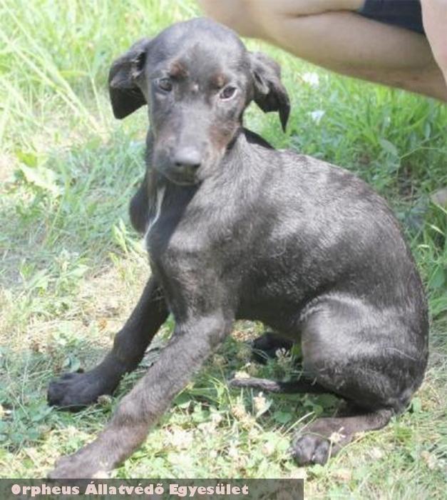 Pici egy kutyafalka tagjaként került az Orpheus telepére. Majdnem egy évbe tellett, mire gazdára lelt - Köszönjük!