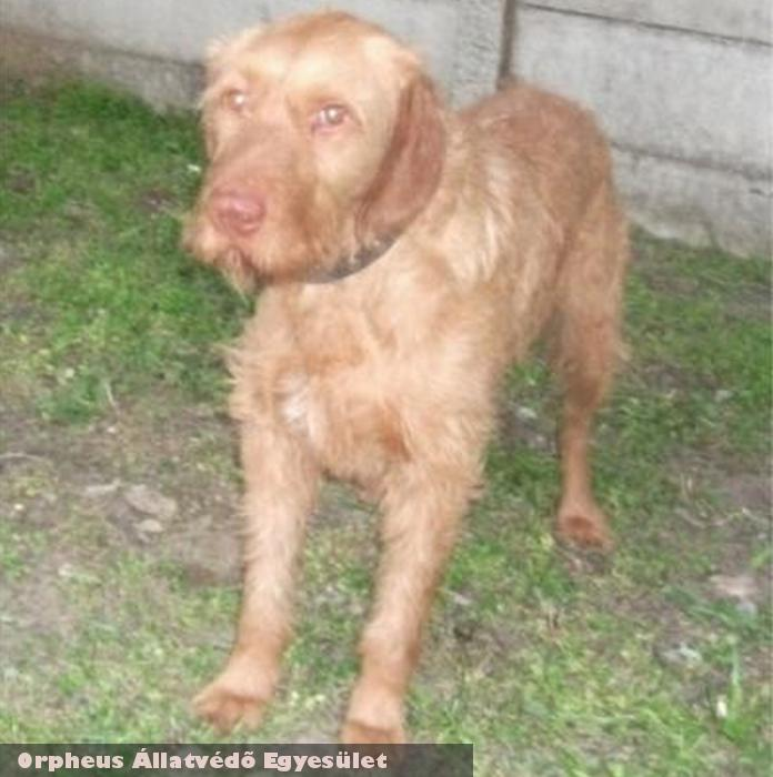Samu az állatvédelmi munka révén került vissza otthonába!