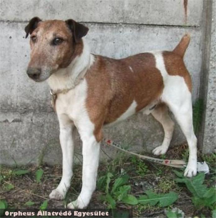 Foki kutya elveszett, az Orpheus az utcán megtalálta, gazdáját felkutatta, így az állat sikeresen hazakerült!