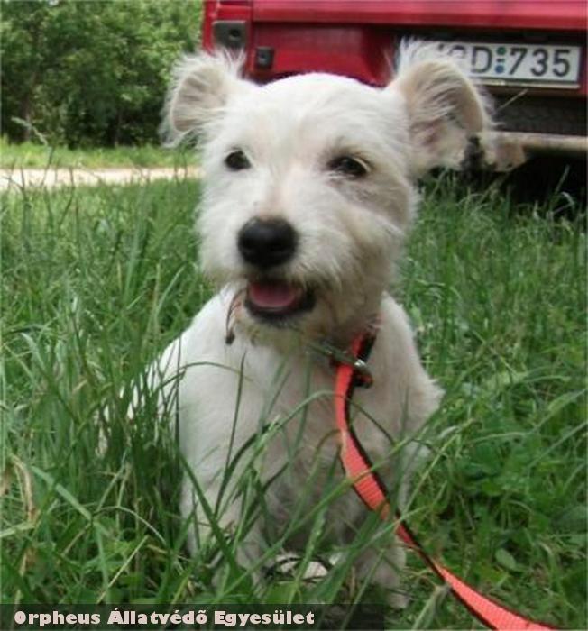 Töpszlit a sérült lábú cuki kutyust Orpheus Állatvédõ Egyesület összeszedte, megmentette