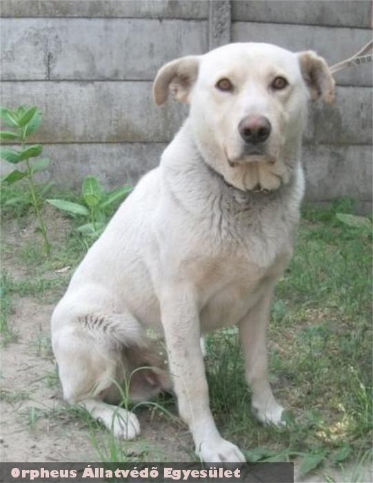 Camaro kutya kóborolt, az Orpheus helyrehozta, gazdához adta